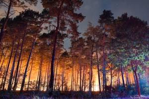 В пригороде Берлина бушует страшный лесной пожар